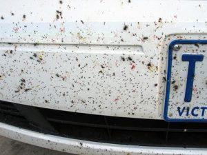 Bugs On Car